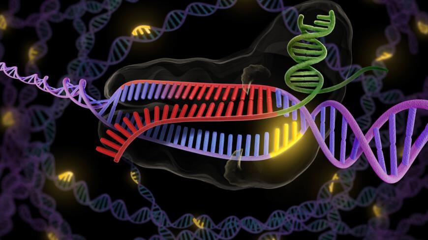 CRISPR therapy