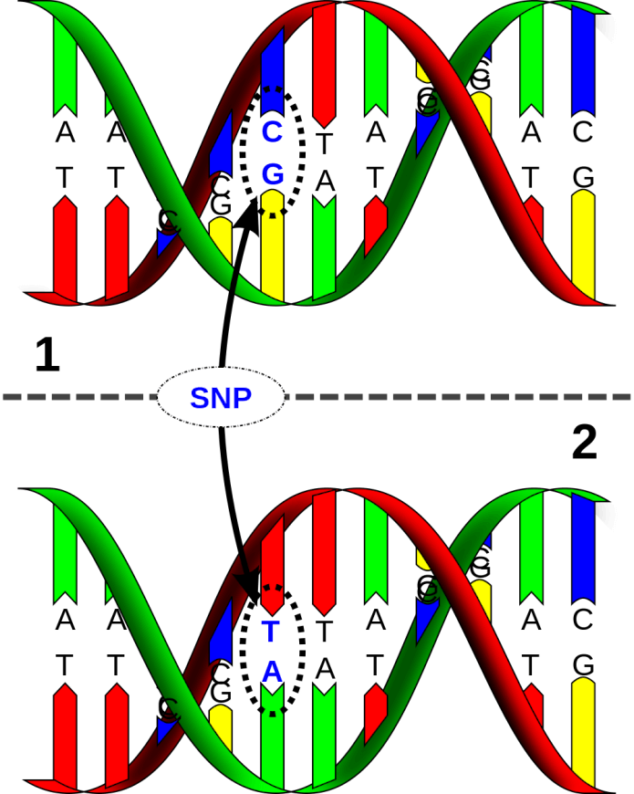 DNA_SNP_Karmagenes review
